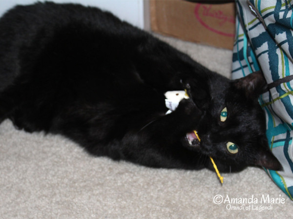 midnight and the mouse toy 2