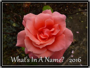 whats in a name 2016